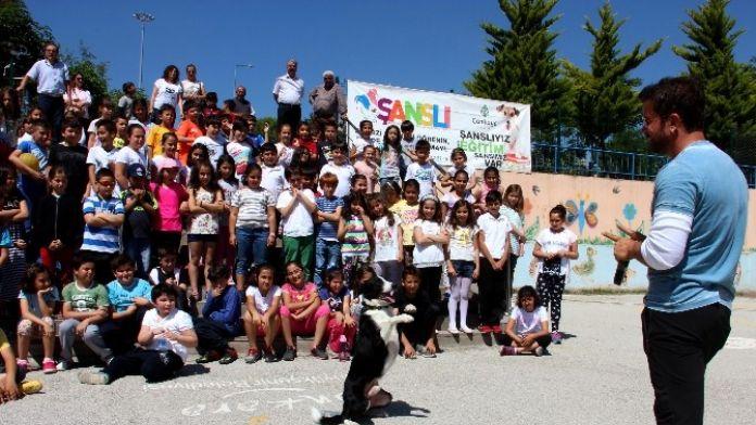 Çankaya Belediyesi'nden Çocuklara 'Sokak Hayvanları' Dersi