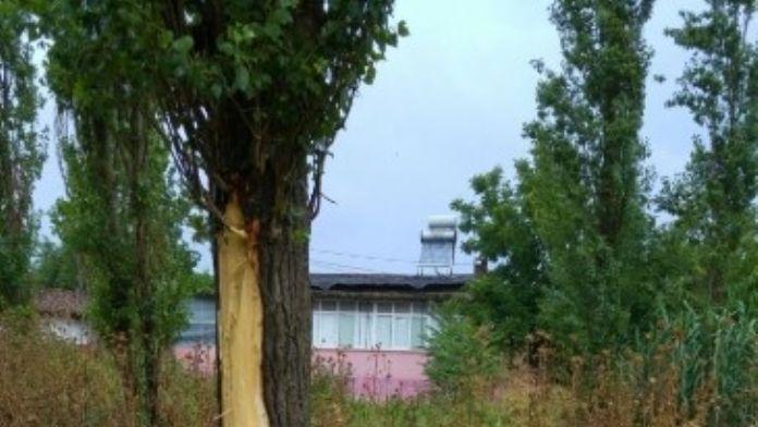 Biga'da Bir Ağaca Yıldırım İsabet Etti