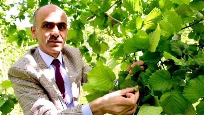 Ulusal Fındık Konseyi Başkanı Arslantürk'e Kozoğlu'nun Ardından Karan'dan Da Tepki