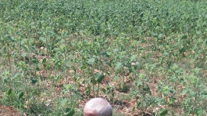 Kayıp çiftçiyi jandarmanın iz takip köpeği buldu