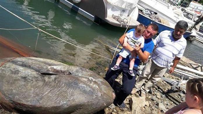 Balıkçıların ağına 500 Kg. Güneş balığı takıldı.