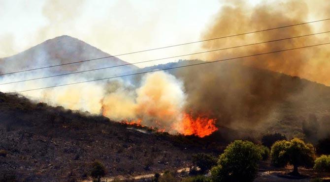 Bodrum'da Yine Orman Yangını