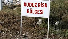 Osmaniye'de kuduz paniği!