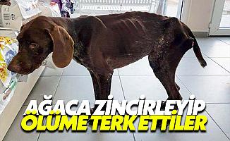 Bodrum'da Bir Köpeği Ölüme Terk Ettiler
