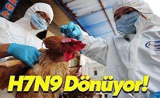 H7N9 Geri Mi Dönüyor?