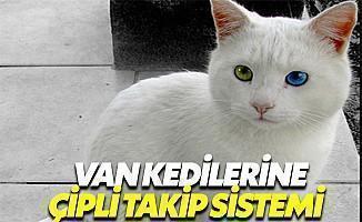 Van Kedilerine Çipli Takip Sistemi