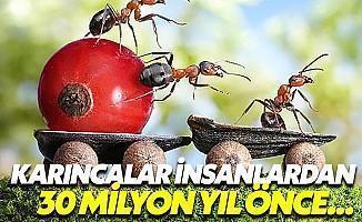 Karıncalar İnsanlara Fark Atmış