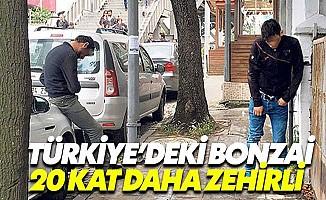 Türkiye'deki bonzai dünyadakinden 20 kat daha zehirli